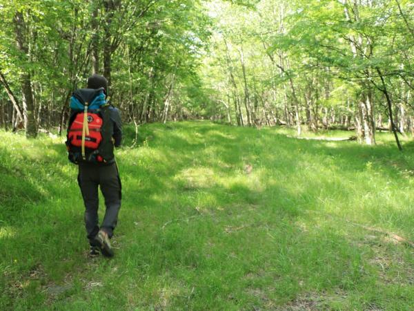 自然林のハイキングも魅力