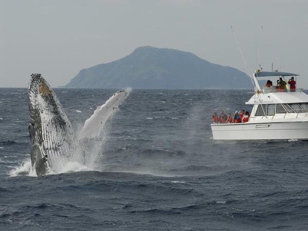 愛らしいクジラたちの姿