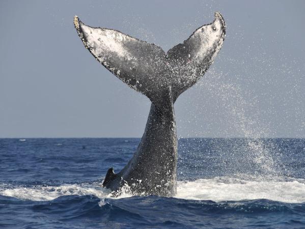 迫力あるクジラを見られることも