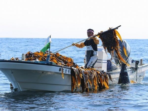 運が良ければ、地元漁師達が今まさに収穫する場面に遭遇することもあります!