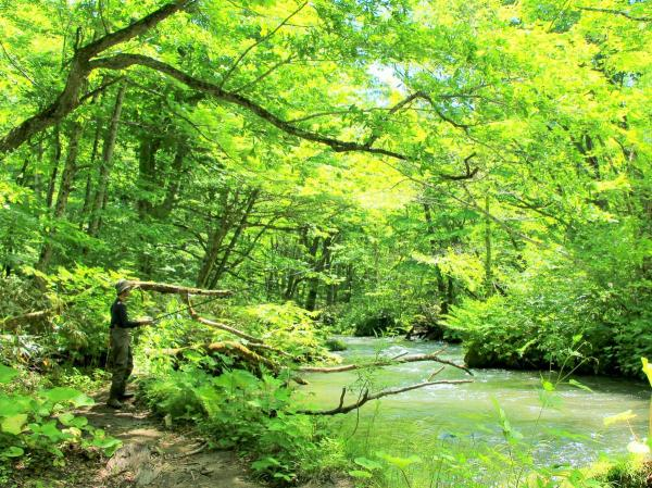 奥入瀬 渓流釣り
