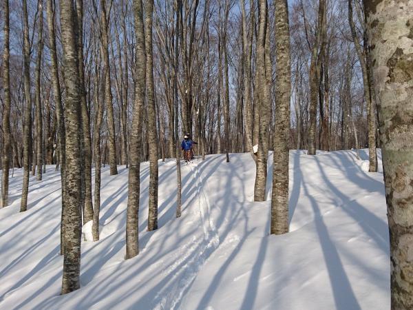 ブナの原生林を自由に散策