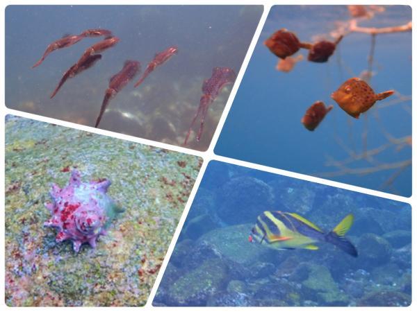 生き物いっぱいの海中世界