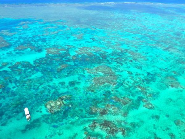 美しい海とサンゴ礁の絨毯の上を空中さんぽ!