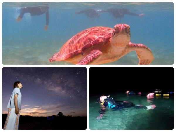 サンセットや星空も見れるナイトシュノーケリングやウミガメさんと会えるコースもあります。