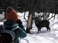 森の中にひょっこり現れる野生動物との出会いも冬のツアーの魅力です。