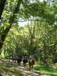 木々のにおいが立ち込めるまさに森の中を馬に乗り散策します。