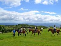 霧島山麓栗野岳の自然を、馬の背に揺られながら満喫!標高700mの広大な草原も魅力の一つ。