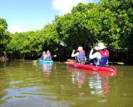 ツアーは、シーカヤックだけではありません!沖縄本島最大のマングローブを間近に体験出来るセットツアーもございます。