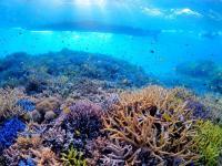 驚くほどカラフルなサンゴが一面に広がっています。
