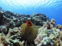 世界的に有名なケラマブルーの海を満喫!