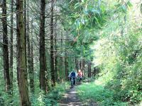 山をマウンテンバイクで爽快に駆け下りよう!