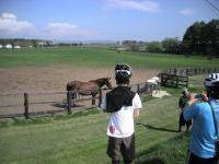 牧場見学もできる!