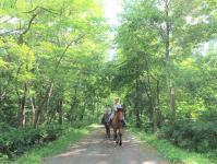 緑に包まれた林の中をゆったり進もう!