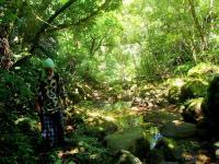 生い茂るジャングルの中をトレッキングで進もう!