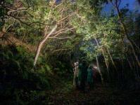 ジャングルの合間から星を眺めましょう