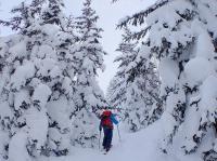大雪山の静かな森を満喫しよう!