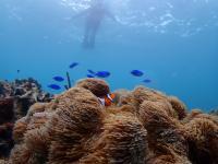 宮古ブルーにはウミガメやお魚がたくさん!