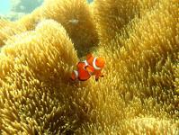 海の中には可愛いお魚がたくさん!