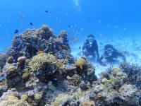 ケラマブルーの海の中は感動の連続