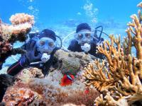 海の中は生き物の宝庫!「ニモ」で人気のクマノミにも会える