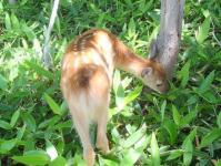 運が良ければ、色々な野生動物に出逢えるかもしれません!
