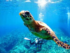 【那覇発】慶良間諸島 1日ボート体験ダイビング&シュノーケリング ◆写真付き