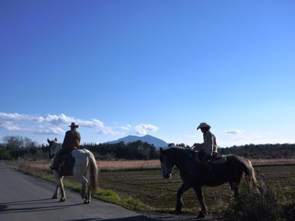 関東連山を眺めながら、のんびり田園・林間ホーストレッキング!