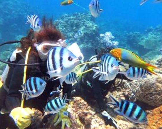 カラフルな魚とサンゴ、のんびり泳ぐカメ・・・など、季節ごとに見どころ満載です。