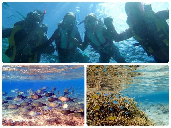 青の洞窟周辺エリアにはたくさんのサンゴとお魚!