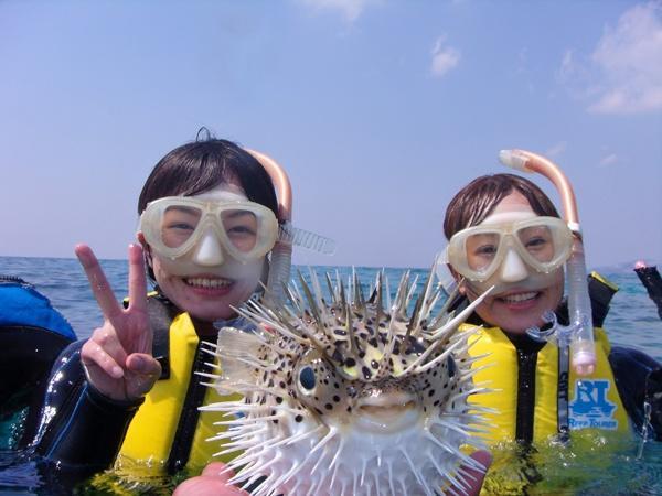 ハリセンボンに遭遇することも・・・。たくさんの数の魚を見ることができます。
