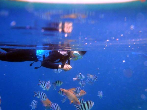 色とりどりの熱帯魚たちと戯れる餌付けタイムもあり、沖縄の海を満喫できる冒険ツアーです。