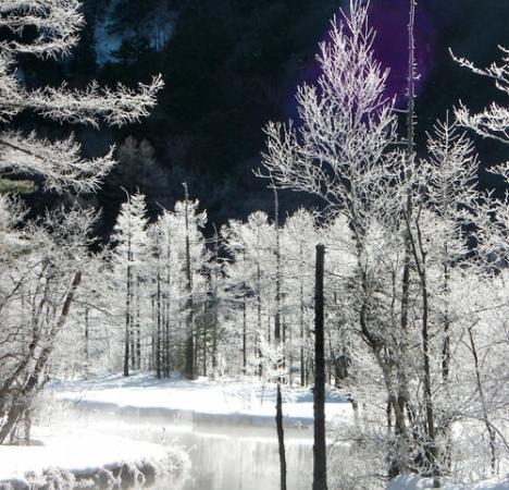 「田代池」の魅力は何と言っても「霧氷」 陽光が枝の先に付いた霧氷たちをダイアモンドのように光り輝かせます!