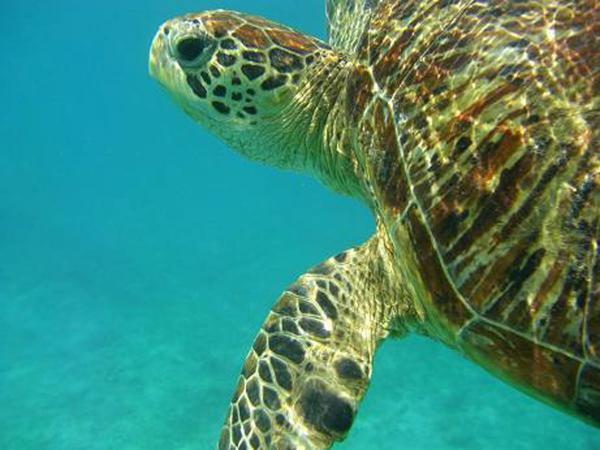ウミガメに会える確率が高いエリアで開催!※海の状況によってはエリアが変わることがございます。