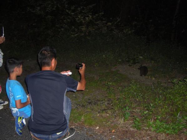 国の天然記念物に指定されているアマミノクロウサギを見に行こう!