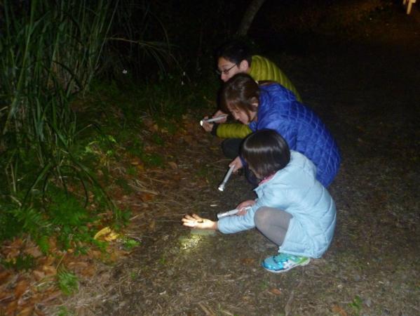懐中電灯で夜の森を照らしてみよう