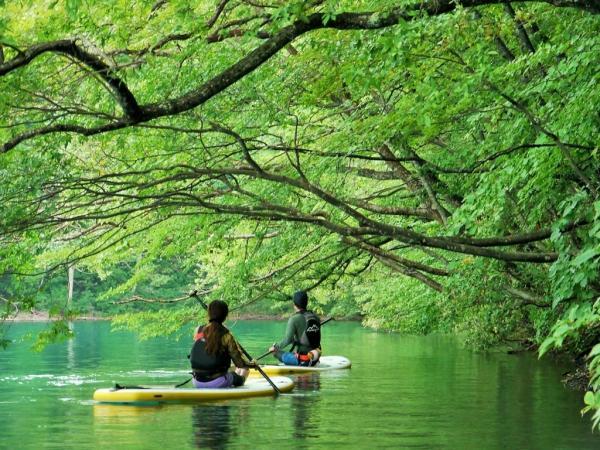 湖面にせり出す木々はまるで緑のトンネル!