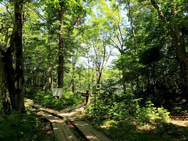 世界自然遺産、知床の森を歩こう