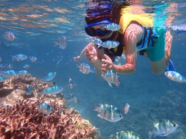 色鮮やかな魚たちがすぐ目の前に!