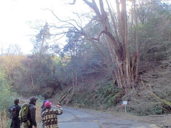 世界農業遺産として登録された高千穂に残る集落・秋元。歴史的な集落を歩きながら楽しみましょう!