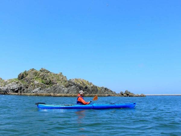 ウミネコが飛び交う、蕪島から漕ぎ出そう!