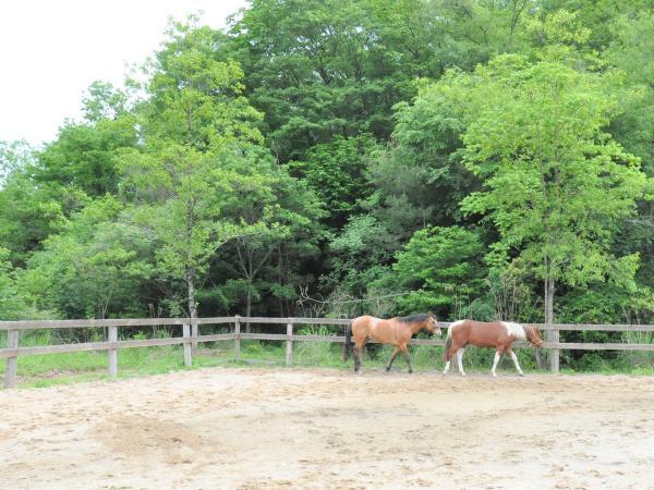 のびのびと過ごす馬たち。