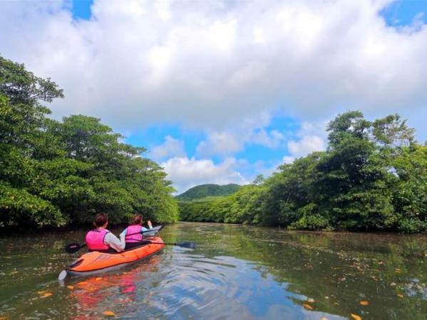 マングローブに囲まれた、穏やかな流れを漕ぎ進みます