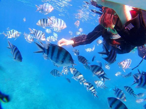 カラフルなお魚がたくさん!