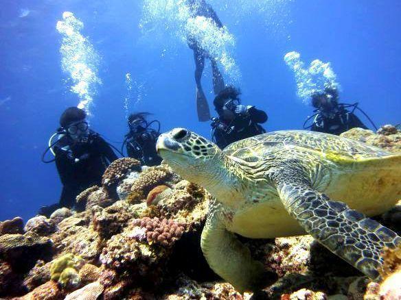 沖永良部島 体験ダイビング