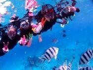 2歳から参加OK!なコースあり!たくさんのサンゴやトロピカルなお魚がいっぱい!水深2~3mの光あふれるポイントで家族みんなで楽しもう!