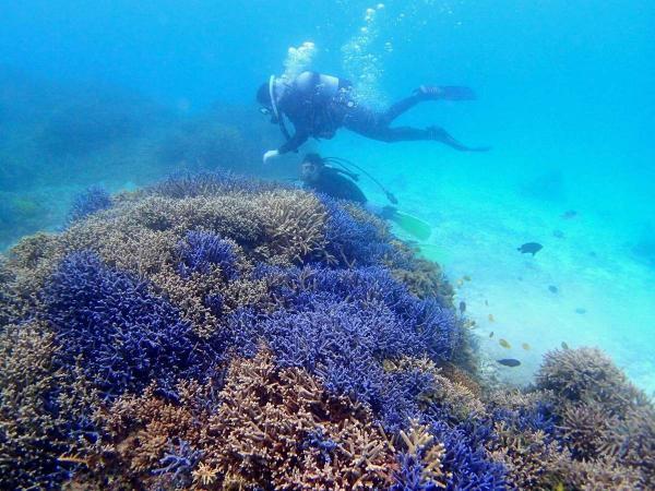 美しい八重山の海を、島人ガイドがご案内します。