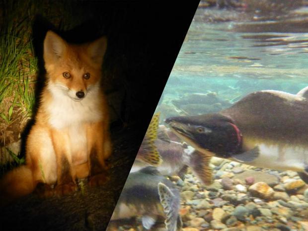 知床 自然観察・動物観察