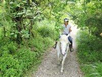 緑の中でリフレッシュ!馬とのコミュニケーションを取りながら癒されてくださいね。