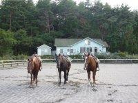 出発前に馬場内で基本操作をレッスンするので、未経験者・初心者も安心してご参加いただけます。